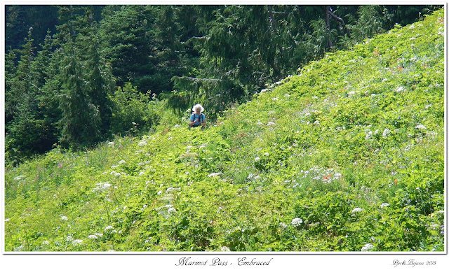 Marmot Pass: Embraced