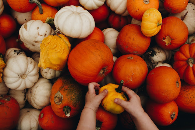 A selection of pumpkins in different shapes, colours and sizes, with a child's hand in the shot taking one