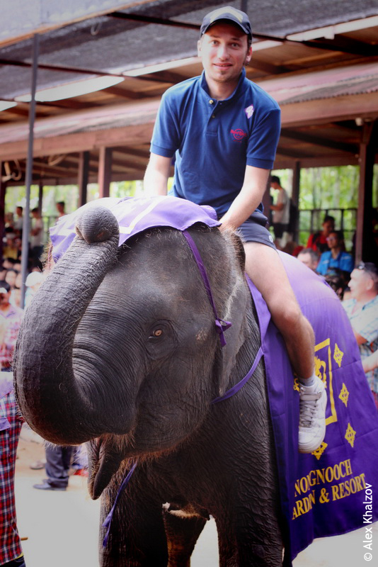 Слон и я