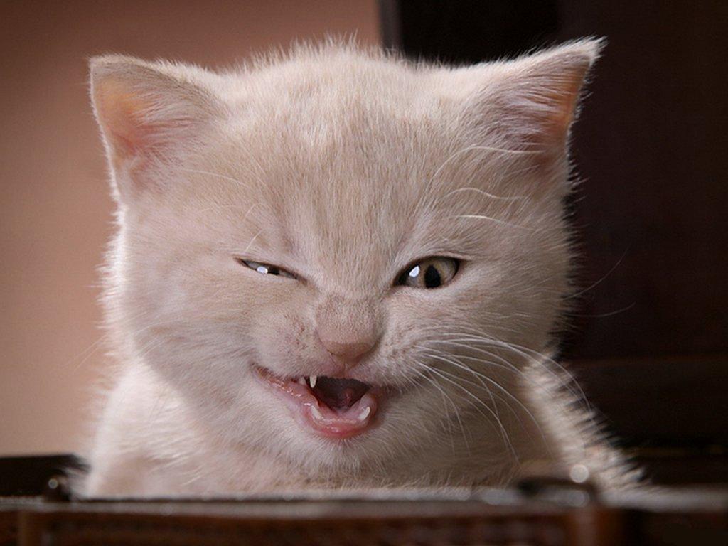 gato - photo #39