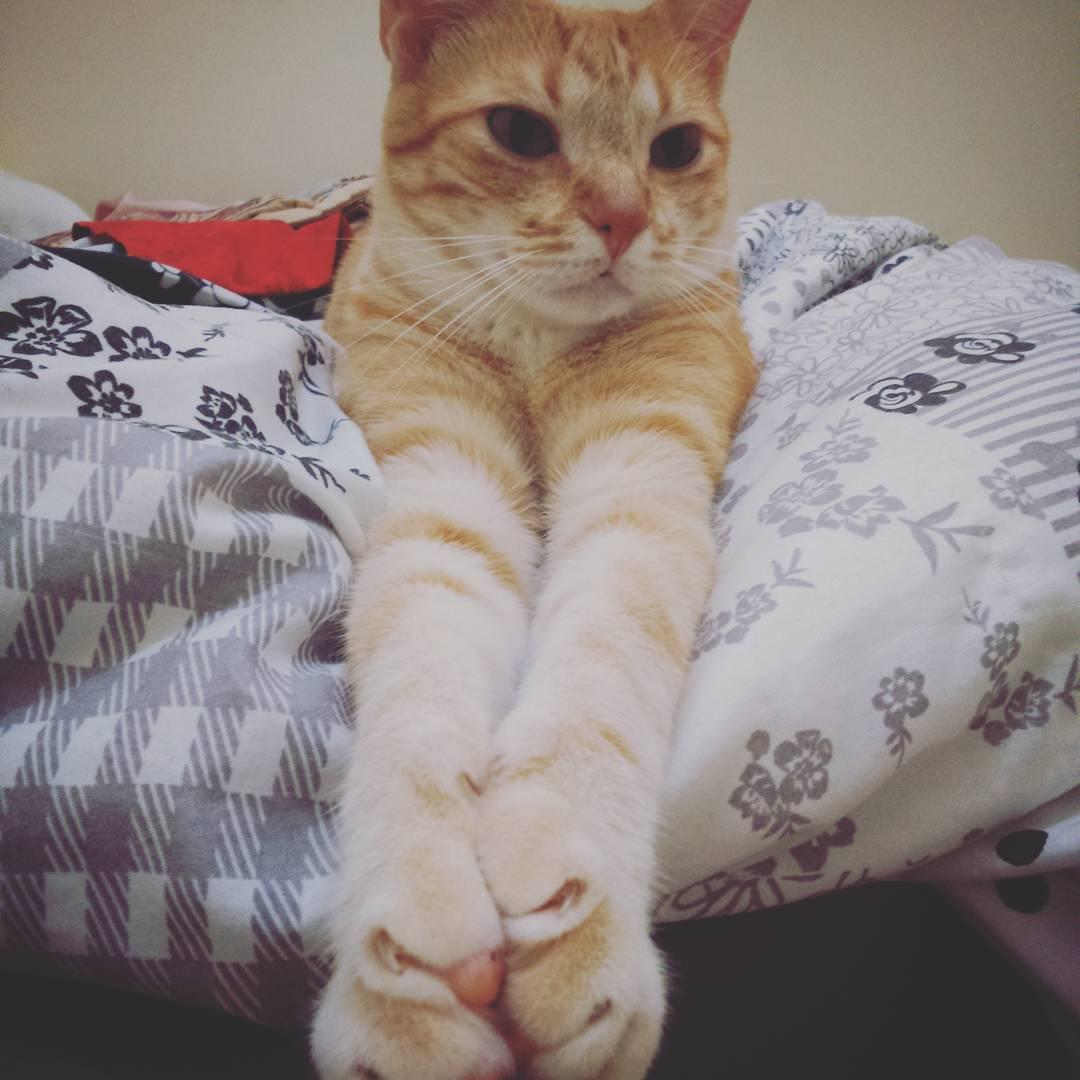 Foto Kucing Lucu Terbaru Dan Menggemaskan 2016 IMGOke