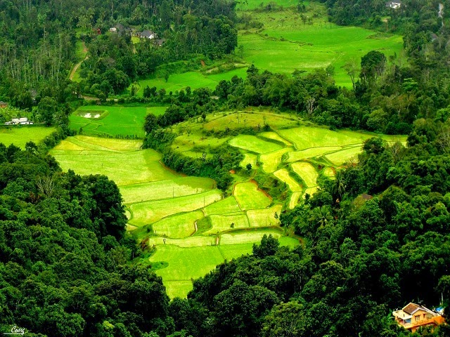 Green valley in Coorg, Karnataka