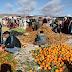 دراسة حول الإدماج القروي من خلال الفلاحة الصغرى بالمغرب