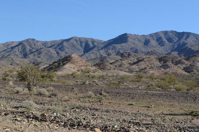 ocotillo and the mountain
