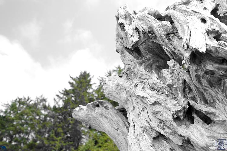 Le Chameau Bleu - Sculpture Bois Flotté à Tofino  sur l'ile de Victoria  au Canada
