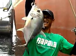Mancing Slow Jig Di Bawah Pelabuhan Dapat Ikan GT