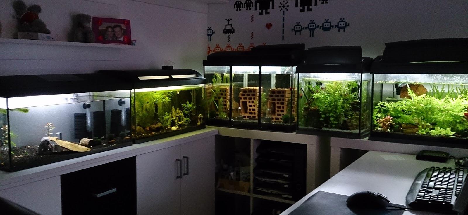 knuts garnelenblog aufbau der aquarienanlage. Black Bedroom Furniture Sets. Home Design Ideas