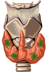 Glándulas paratiroides, alrededor del tiroides
