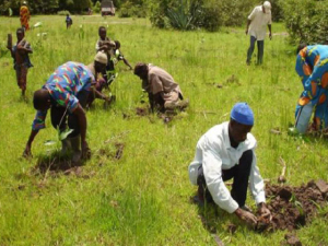 FG Woos Youths to Agriculture