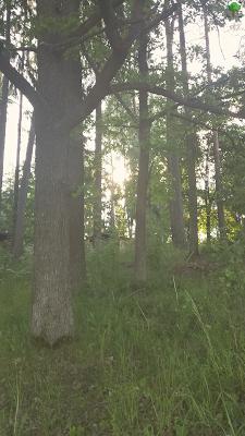 świetlisty las - retro