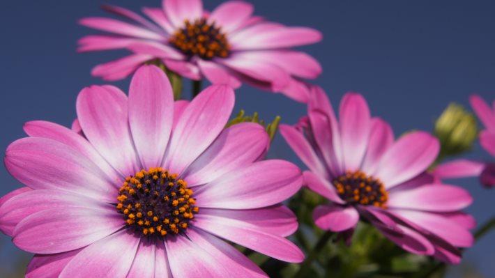 Wallpaper: Purple Flowers