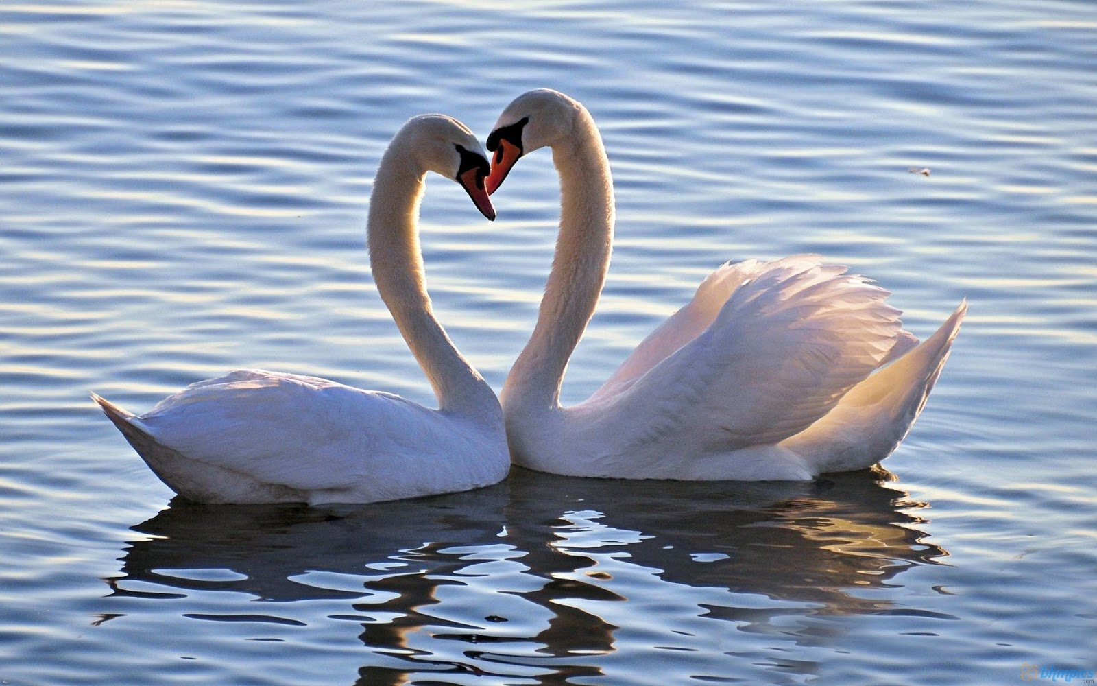 Incredible Images: Love Birds (High resolution)