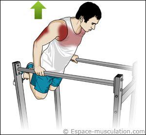Dips muscles concernés