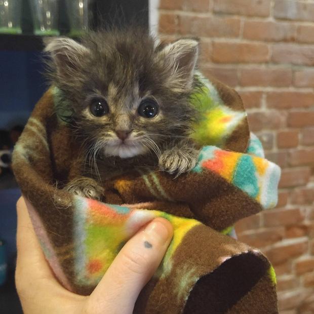 Chân dung 15 boss mèo lười nhác chỉ thích nằm cuộn tròn trong chăn