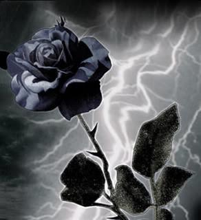Gambar Bunga Mawar Hitam  Gambar Foto Wallpaper