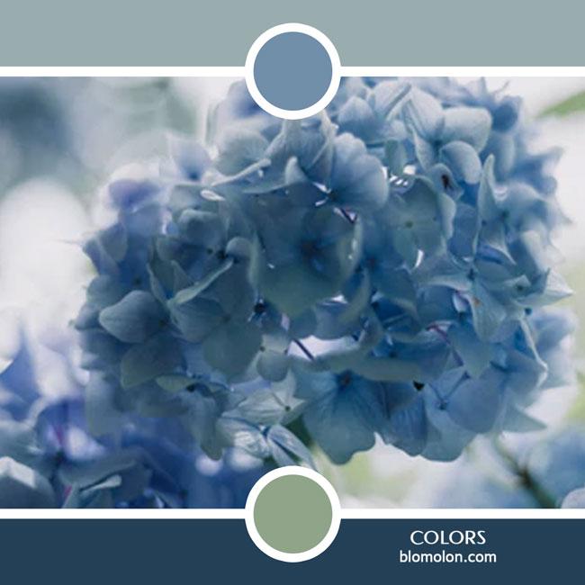 variedad_en_color_color_54