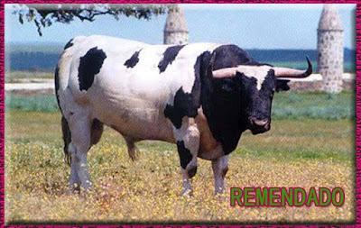 Diferentes razas de toros - Página 5 10440624_777730249011079_5401481303195891888_n
