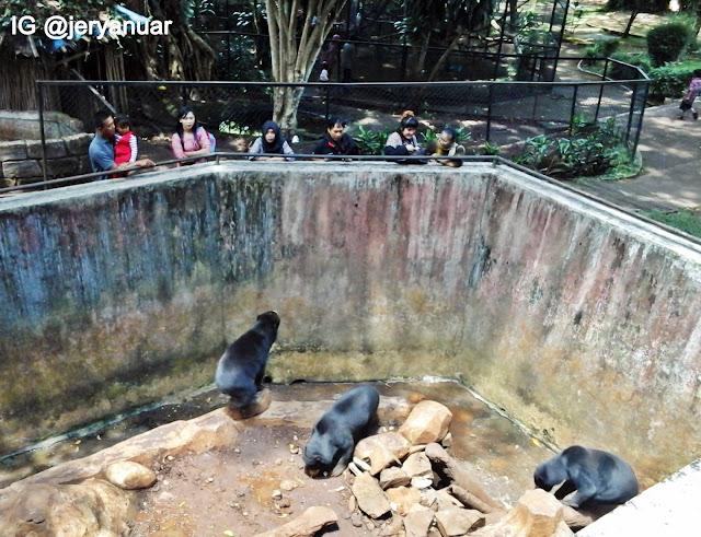 kandang beruang madu kebun binatang bandung