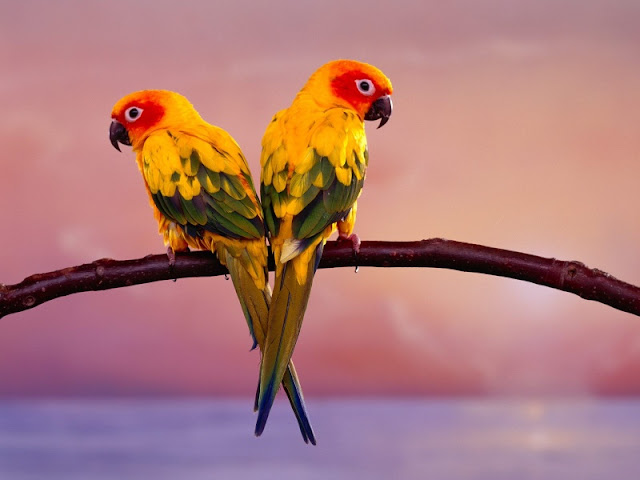 Bird Pictures Amazing Birds: Where You Can Download All Kind Of