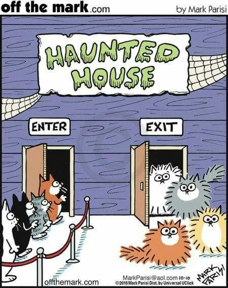 Funny Halloween Cats for a Laugh! #FridayFrivolity - Devastate Boredom
