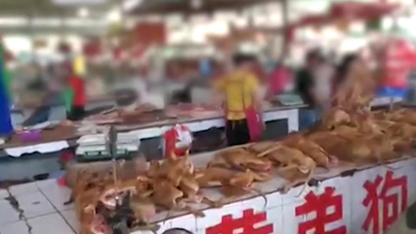 China abrió su feria anual de carne de perro en plena pandemia mundial por coronavirus