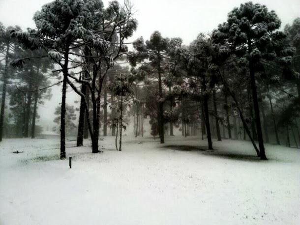 Vegetação Envolta pela Neve em Gramado