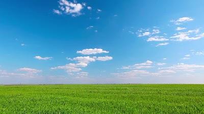 The Green Grass