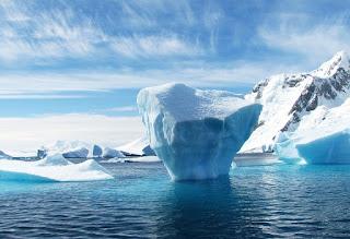 Flea infestation - adults tip of the iceberg