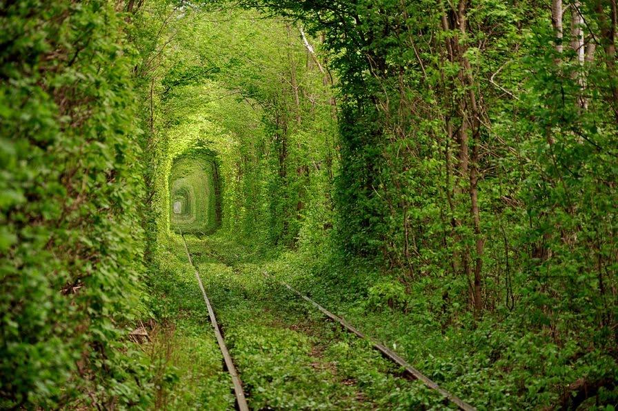 BEAUTY OF GOD: Organic Green Nature OF The God