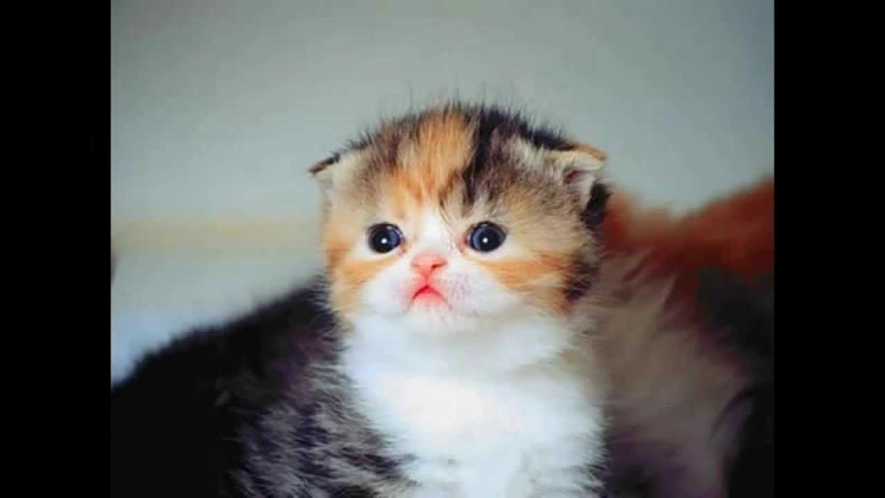 Solusi Mengatasi Kutu Pada Kucing Menjual Berbagai Macam Obat