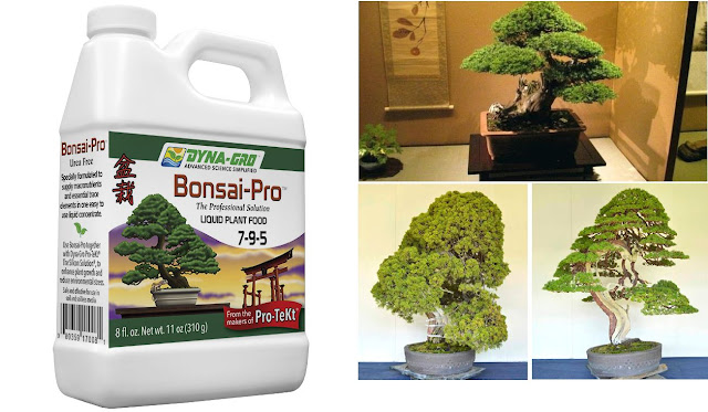 Organic Bonsai fertilizer review - Care Guide Tutorial for Bonsai Enthusiasts