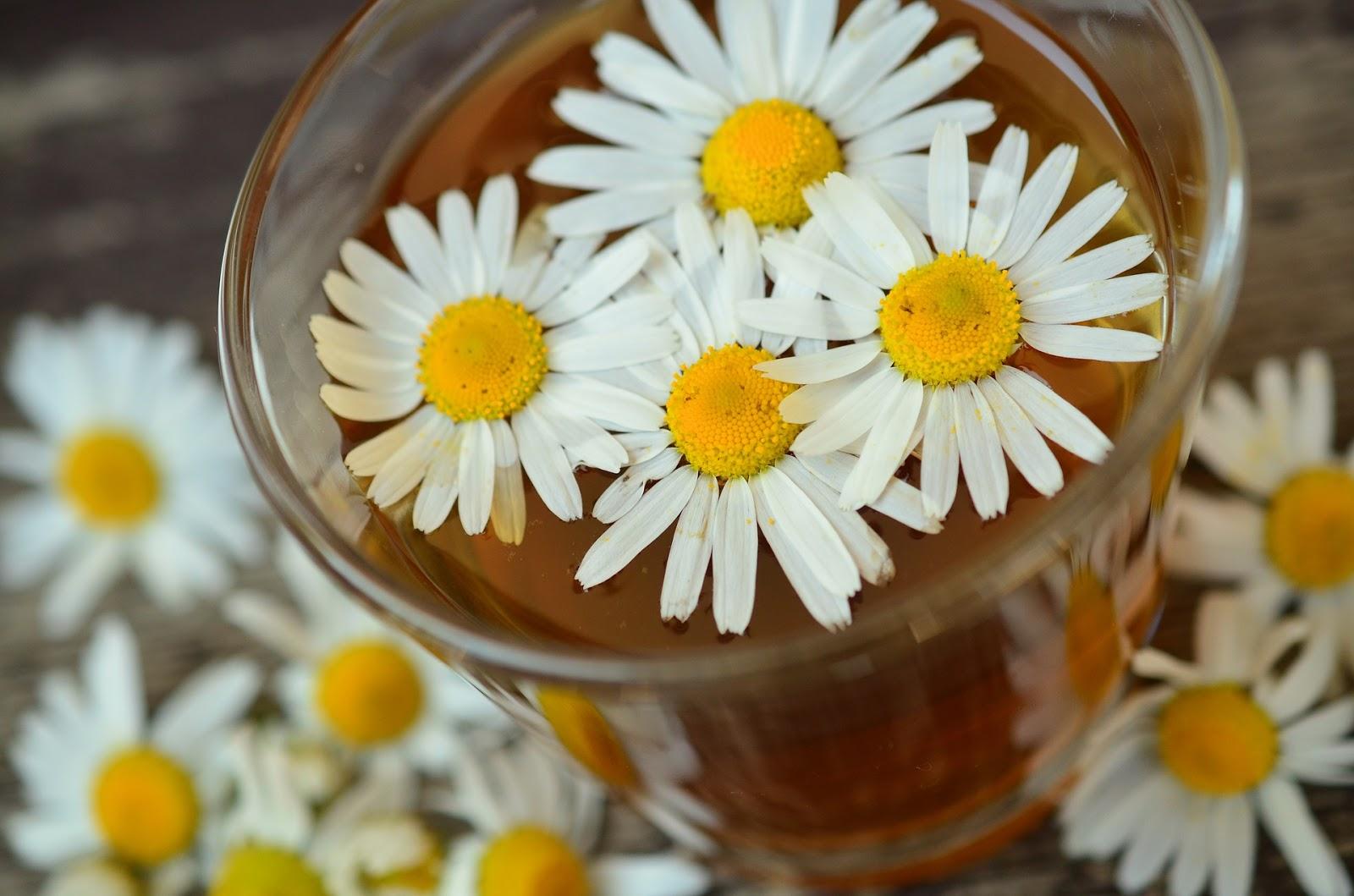 https://pixabay.com/pl/rumianek-kwiaty-rumianku-829220/