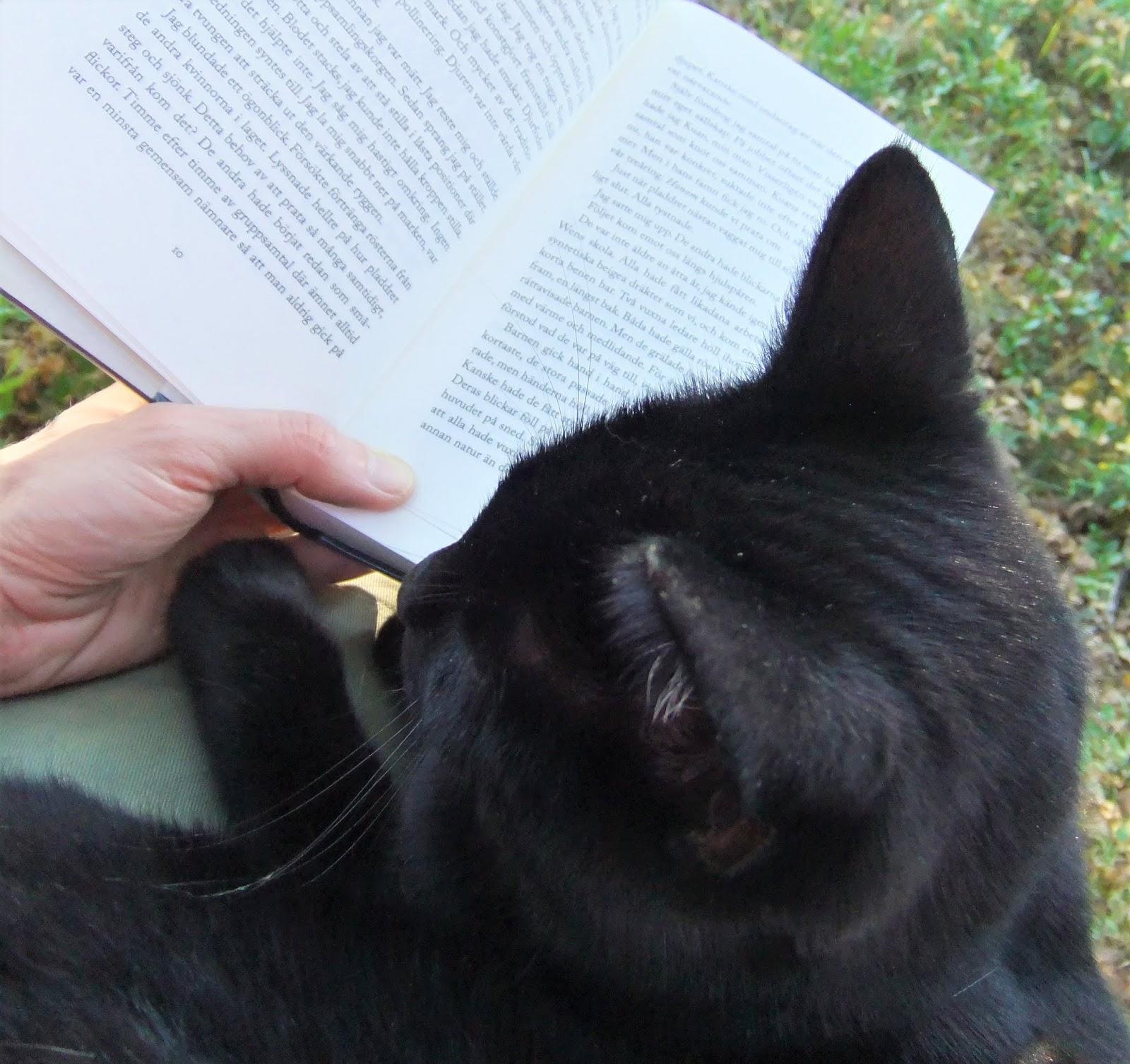 Grafiska vyer och katter