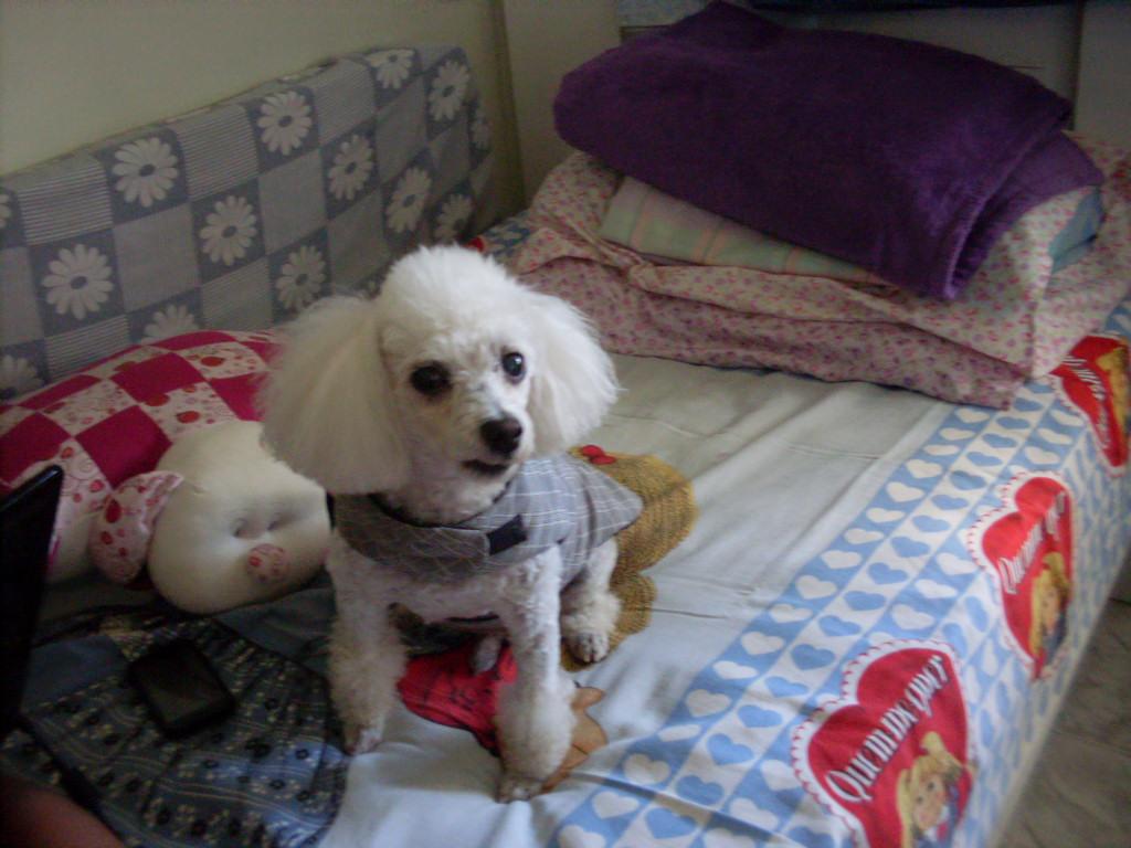 Luckynho O Mundo De Um Dog: Olá Amigos Queridos Passei