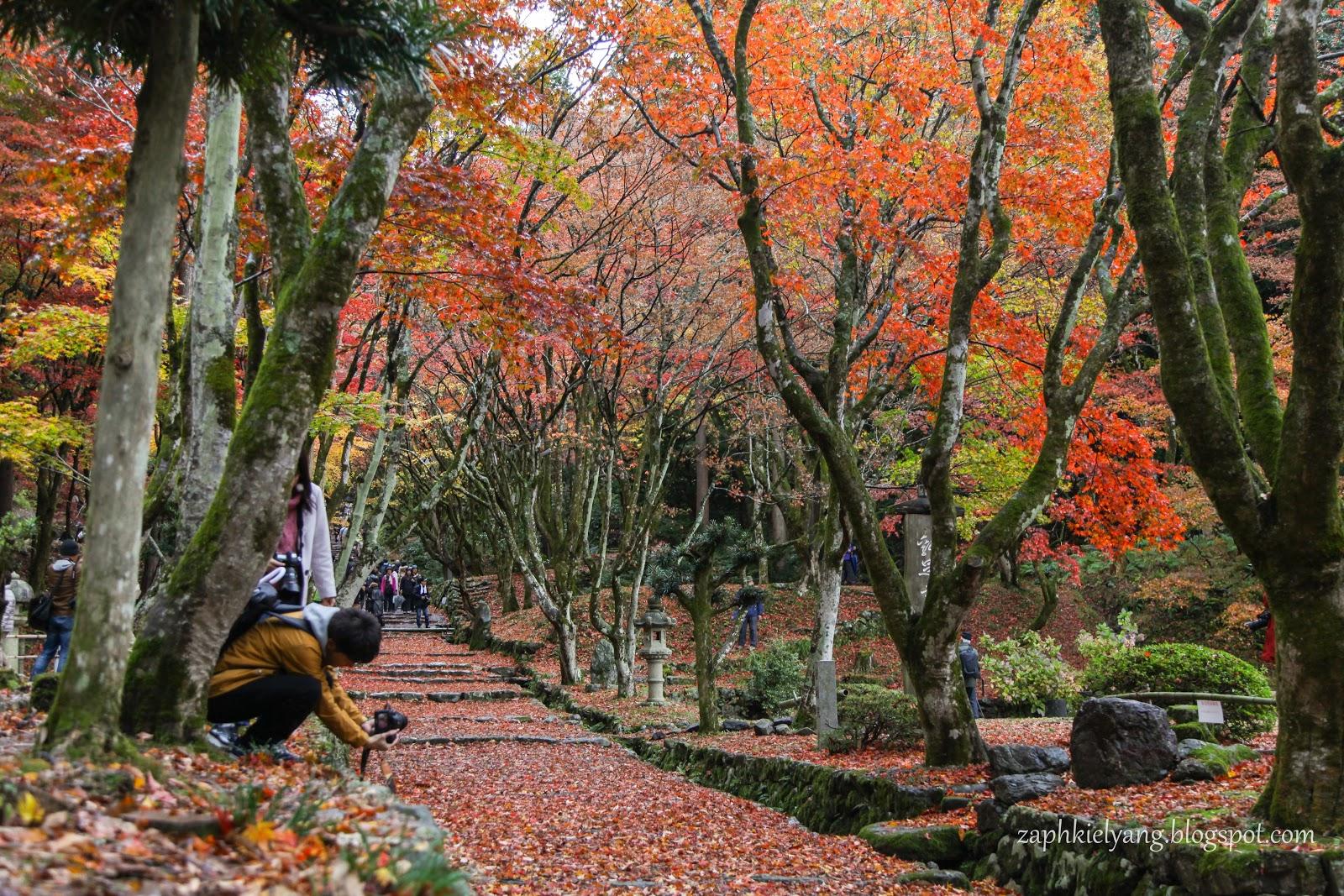 【日本 滋賀】日本關西秋季賞楓之旅 - 滋賀湖北紅葉名所木之本雞足寺