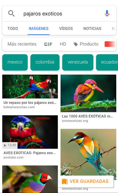 Se muestran los cambios realizados por GOOGLE en su buscador de imágenes para Android