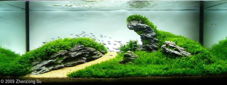 Bể thủy sinh dùng rất nhiều rêu lửa