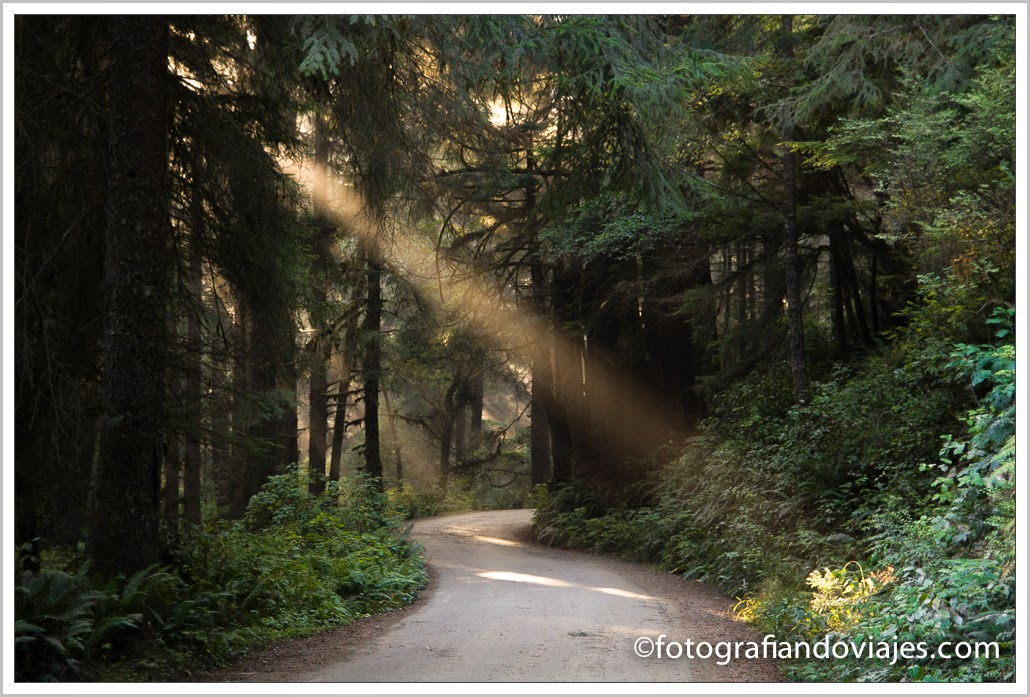 camino al camping Gold Bluffs en Redwood