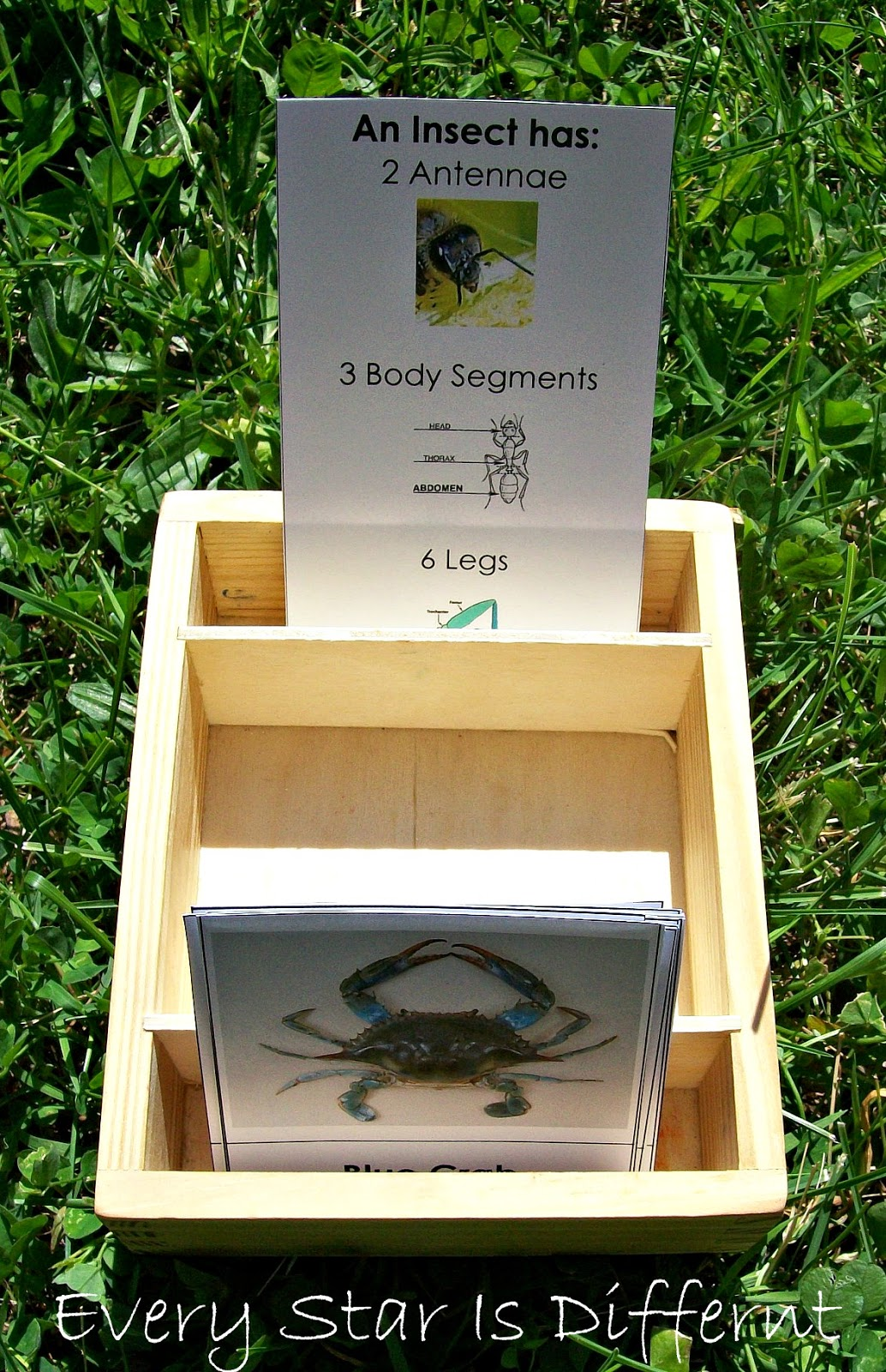 Is it an insect? Activity for kids (free printable)