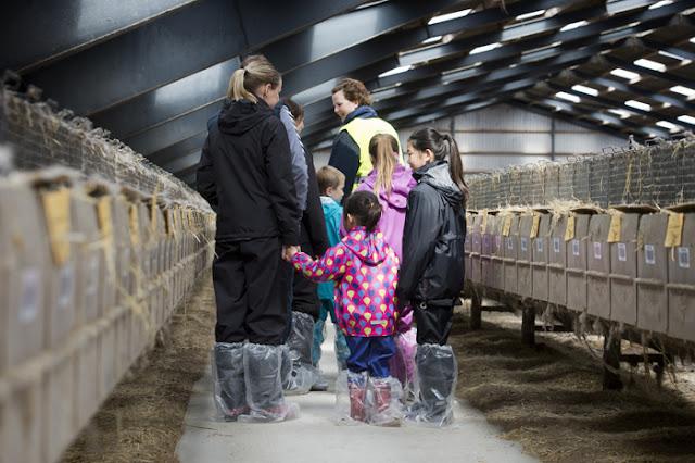 Open Farm στη Δανία: Οικογένειες επισκέφθηκαν τις φάρμες βιζόν