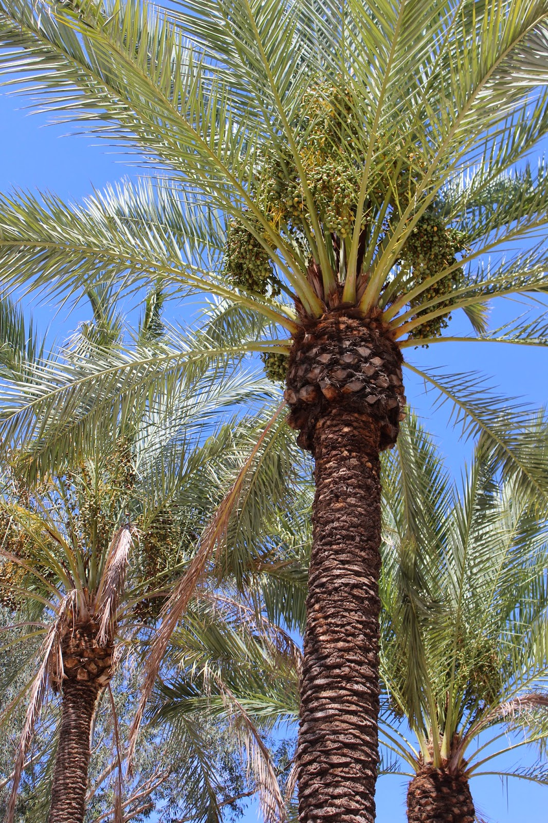 Pirolisis Biomasa dan Pembriketan di MENA