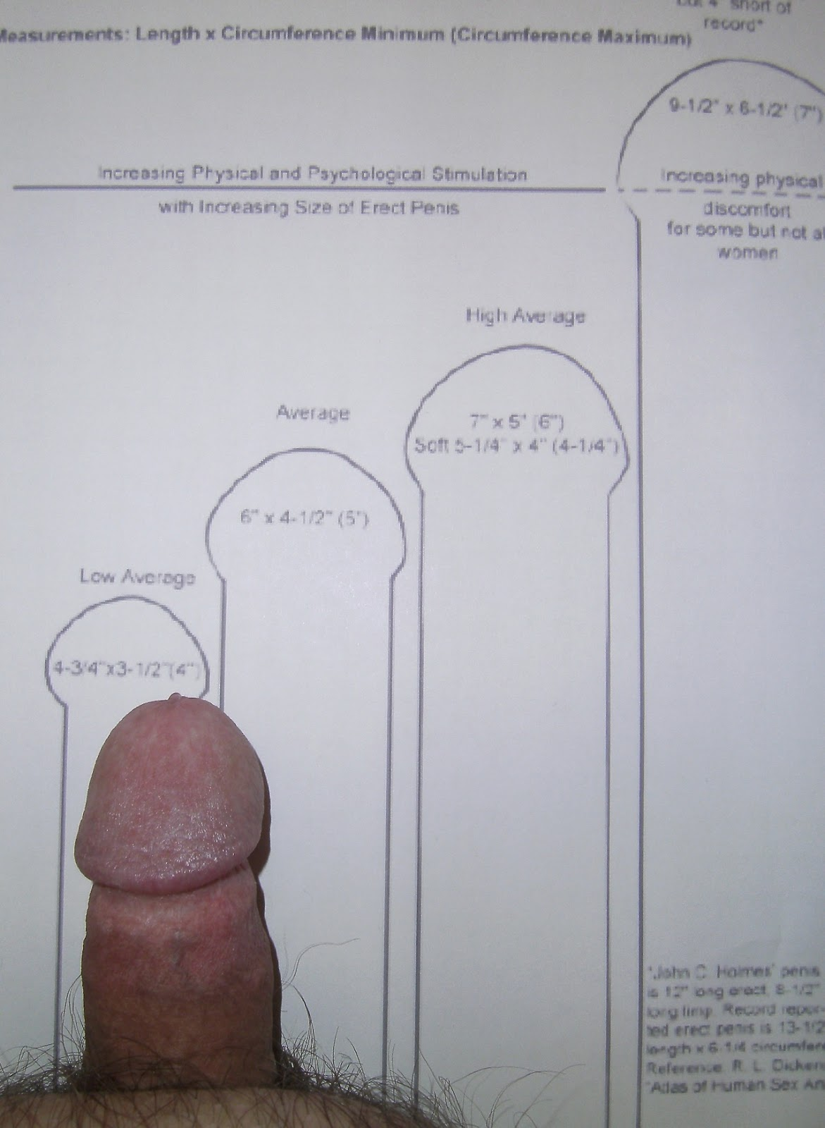 Penis average size erected by height — photo 9
