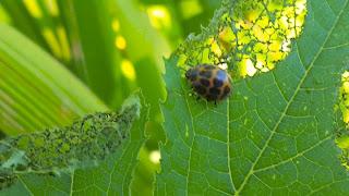 Quién se come mis plantas - Guía para controlar las plagas mas comunes del huerto - 4