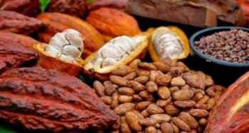 Indonesia Peringkat ke 3 Penghasil Coklat di Dunia