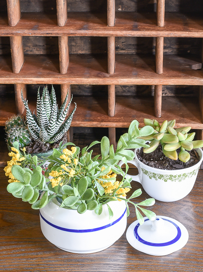 tips and tricks for caring for succulents