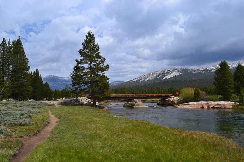 parc, californie, yosemite Tuolumne Meadows