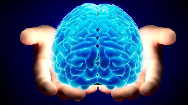 13 Jenis Makanan Penyehat Otak Terbaik yang Wajib Dikonsumsi