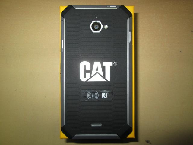 do you neuter a male cat