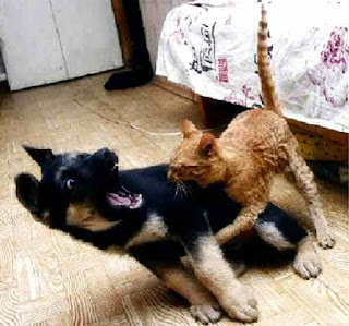 Cat attacks dog
