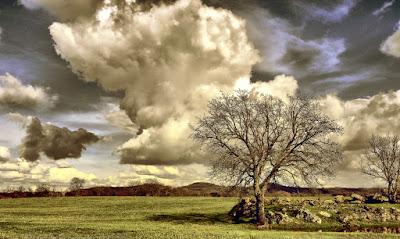 Dove si formano le nuvole grazie agli alberi